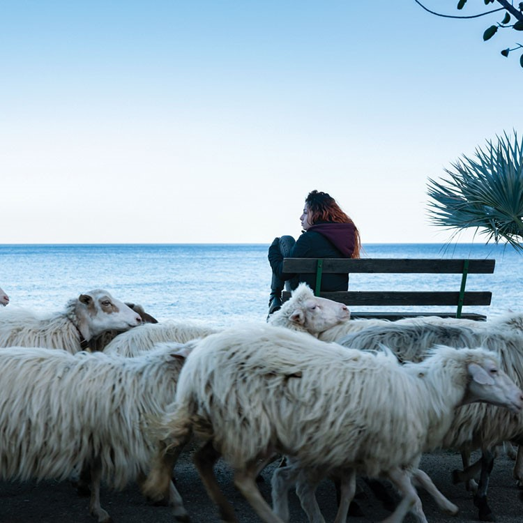 a group of sheep sit on a bench