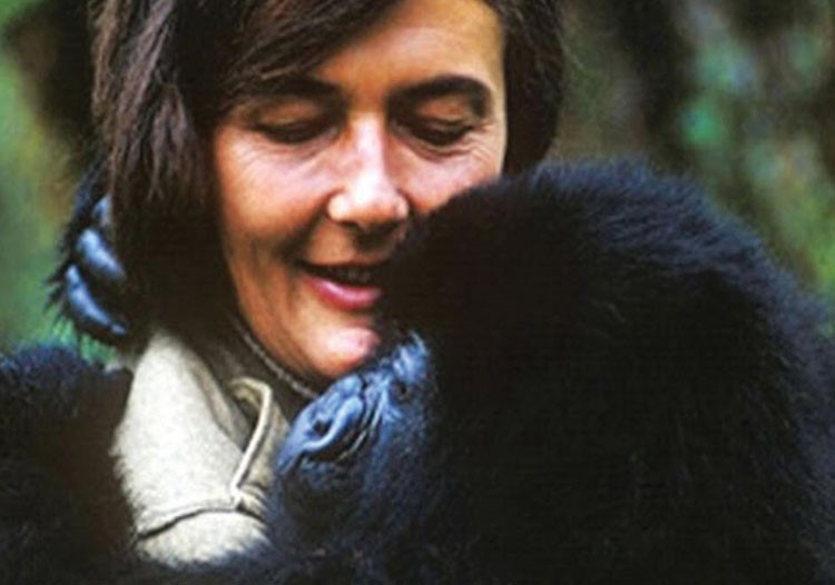 Dian Fossey with a gorilla