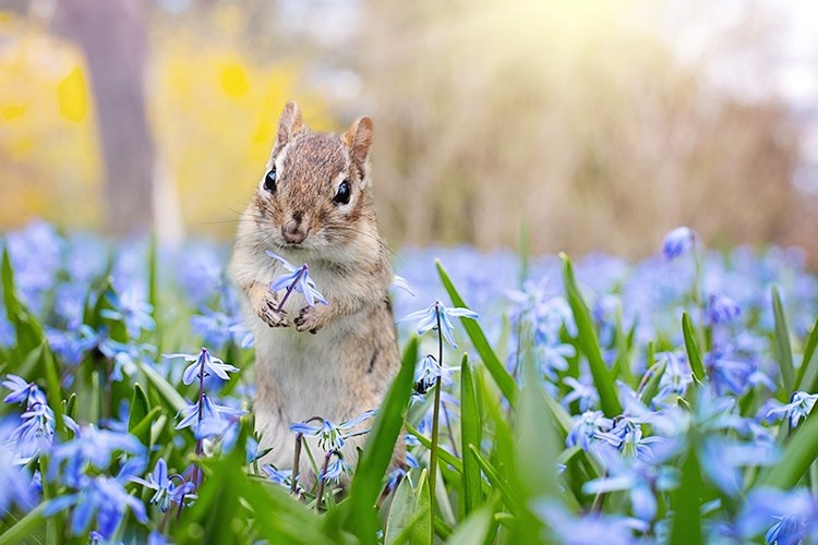 a squirrel in a field of flowers