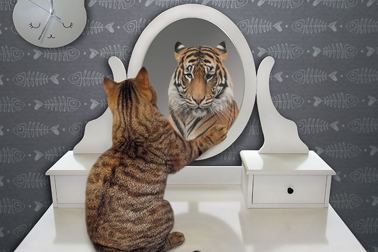 a cat looking at a mirror
