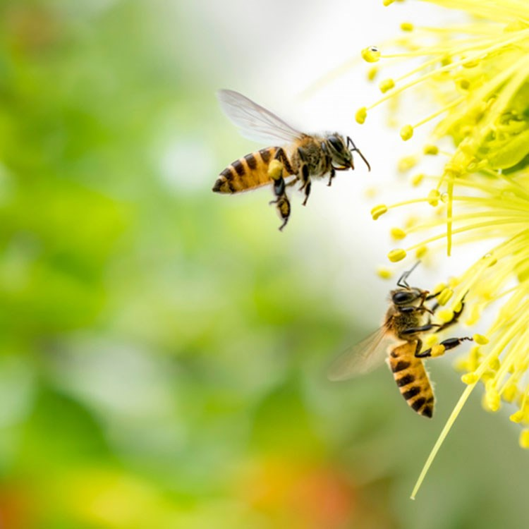 a couple of bees on a flower