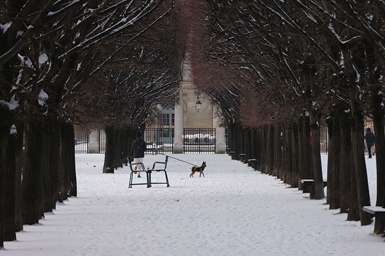 a person walking a dog in the snow