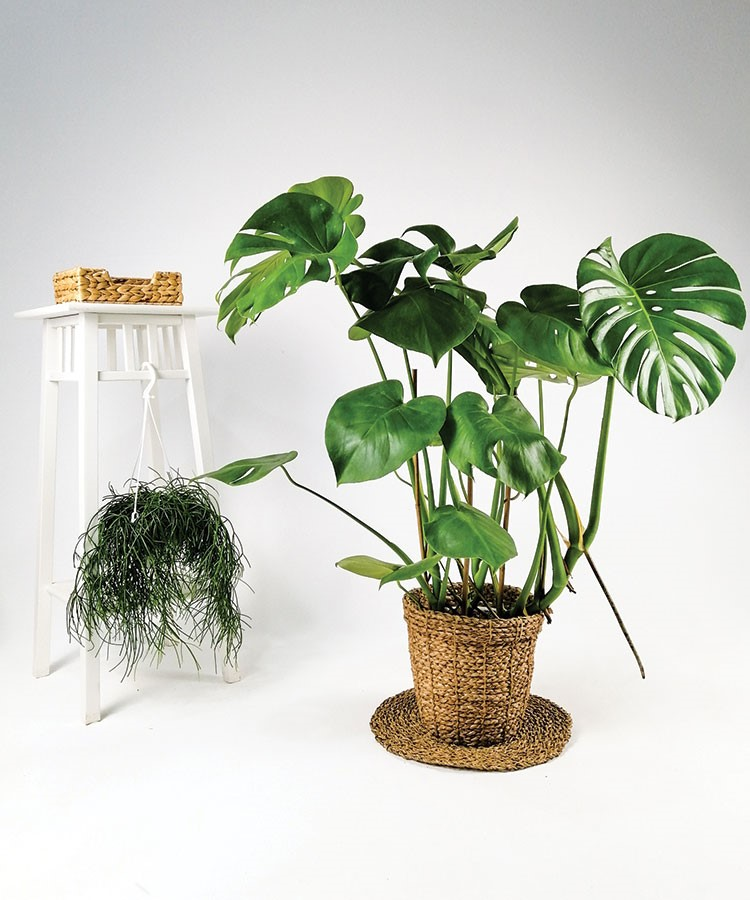 a couple potted plants