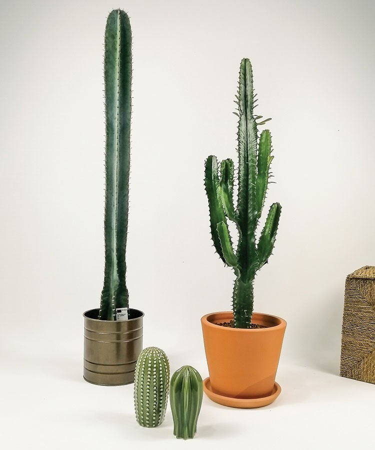 a group of cactus in pots