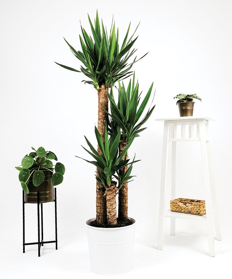 a group of potted plants