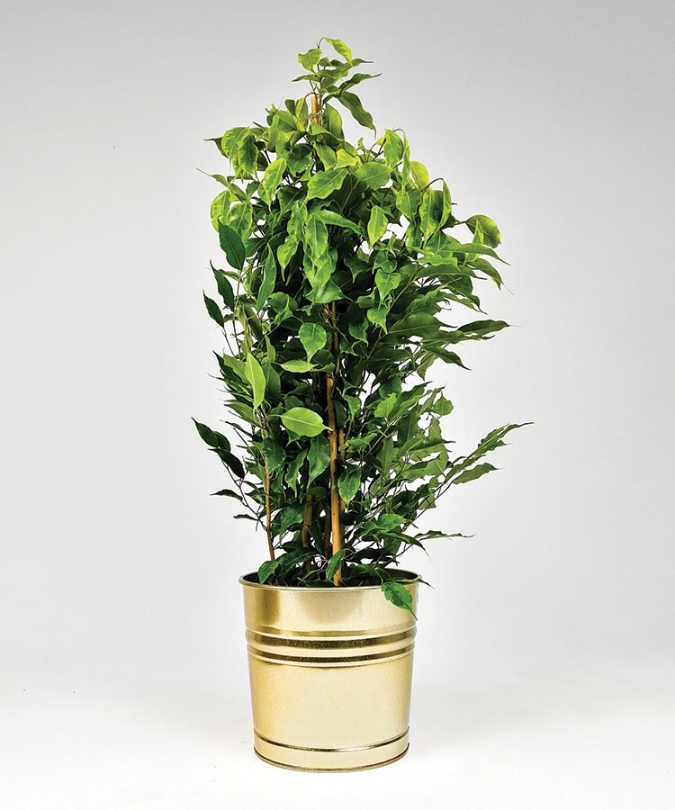 a potted plant in a pot