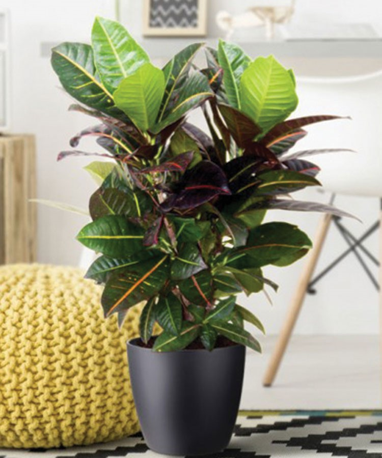 a potted plant with a green leaf