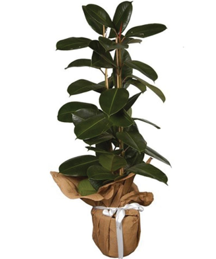 a potted plant with a green plant in it