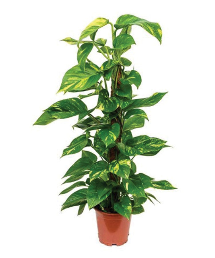 a potted plant with green leaves