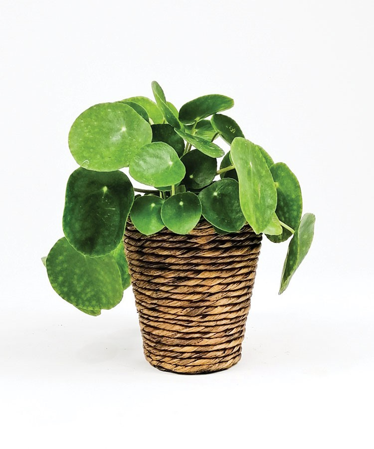a potted plant with leaves