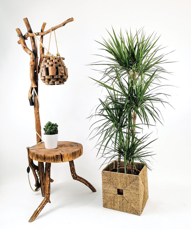 a table with a plant and a basket with a plant on it