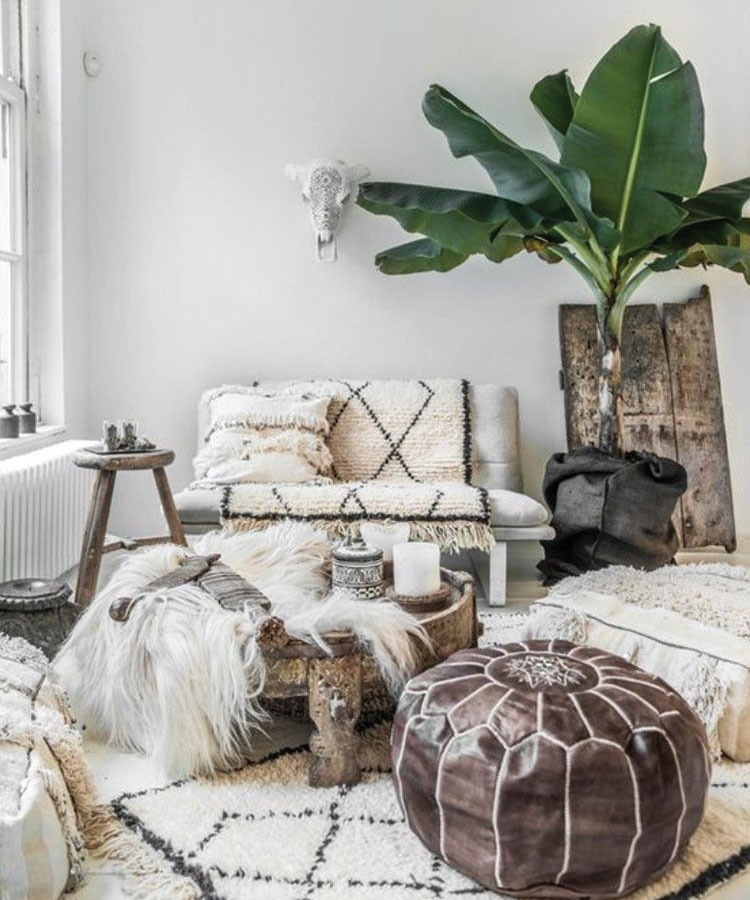 a living room with a couch and a plant