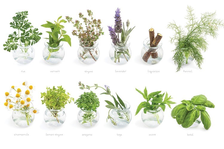 a group of plants in glass vases