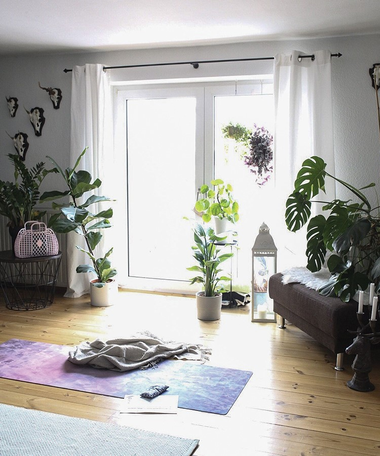 a room with a rug and plants