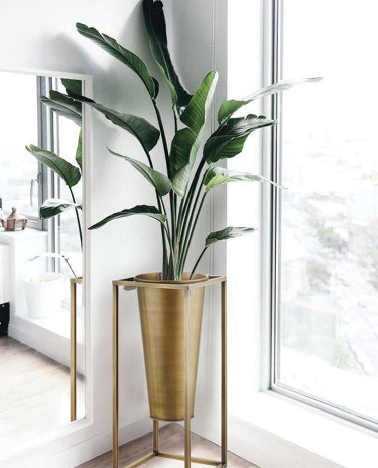 a plant in a vase