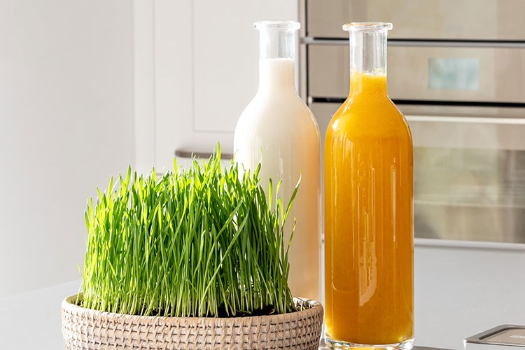 a couple of glass bottles with liquid in them and a plant in the front