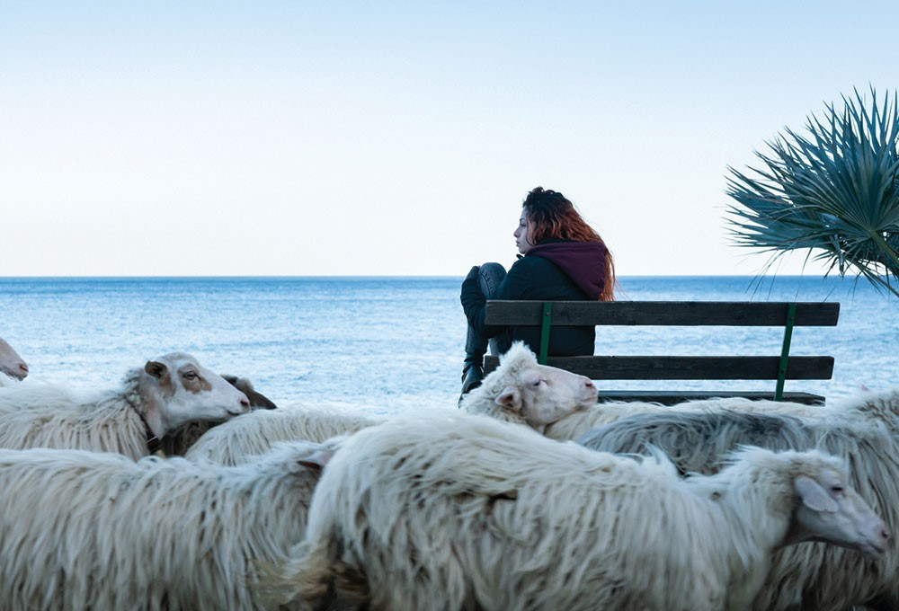 a person sitting on a bench surrounded by sheep