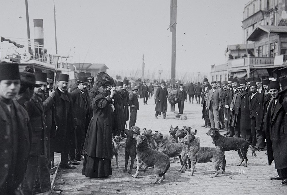 a group of people walking down a street with dogs