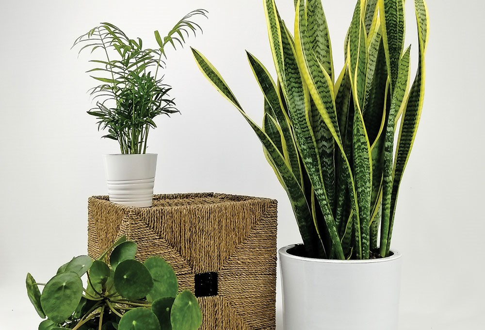 a couple of potted plants
